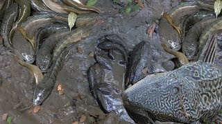 Deep Hole Fishing In Cambodia | Two Boys Catch Fish From Hole | Amazing Deep Hole Full Video 2017