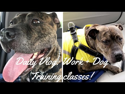 Daily Vlog: working + dog training class!!