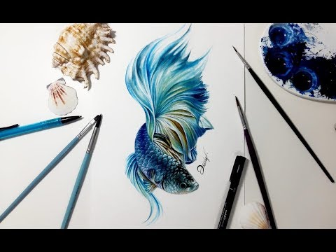 Speed drawing - BETTA FISH 【Aquarela /Watercolor Speedpaint】