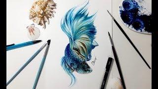 Speed drawing - BETTA FISH 【Aquarela /Watercolor Speedpaint】