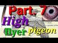 High flyer pigeon. Ache Nasal ke kabutar ki pehchan kaise kre. Part. 7