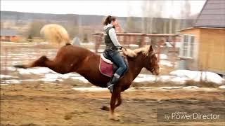 лошади♥.  клип~