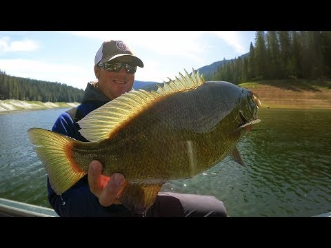 Download Youtube: Bass Fishing For 6 lb Smallmouth | Swimbaits, Crankbaits and 100 Mile Runs!