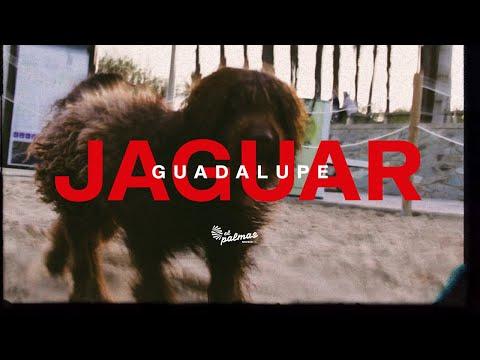 Jaguar - Guadalupe