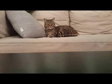 Cute cat wakes up