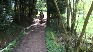 Western Riding & Pony Trekking in Surrey