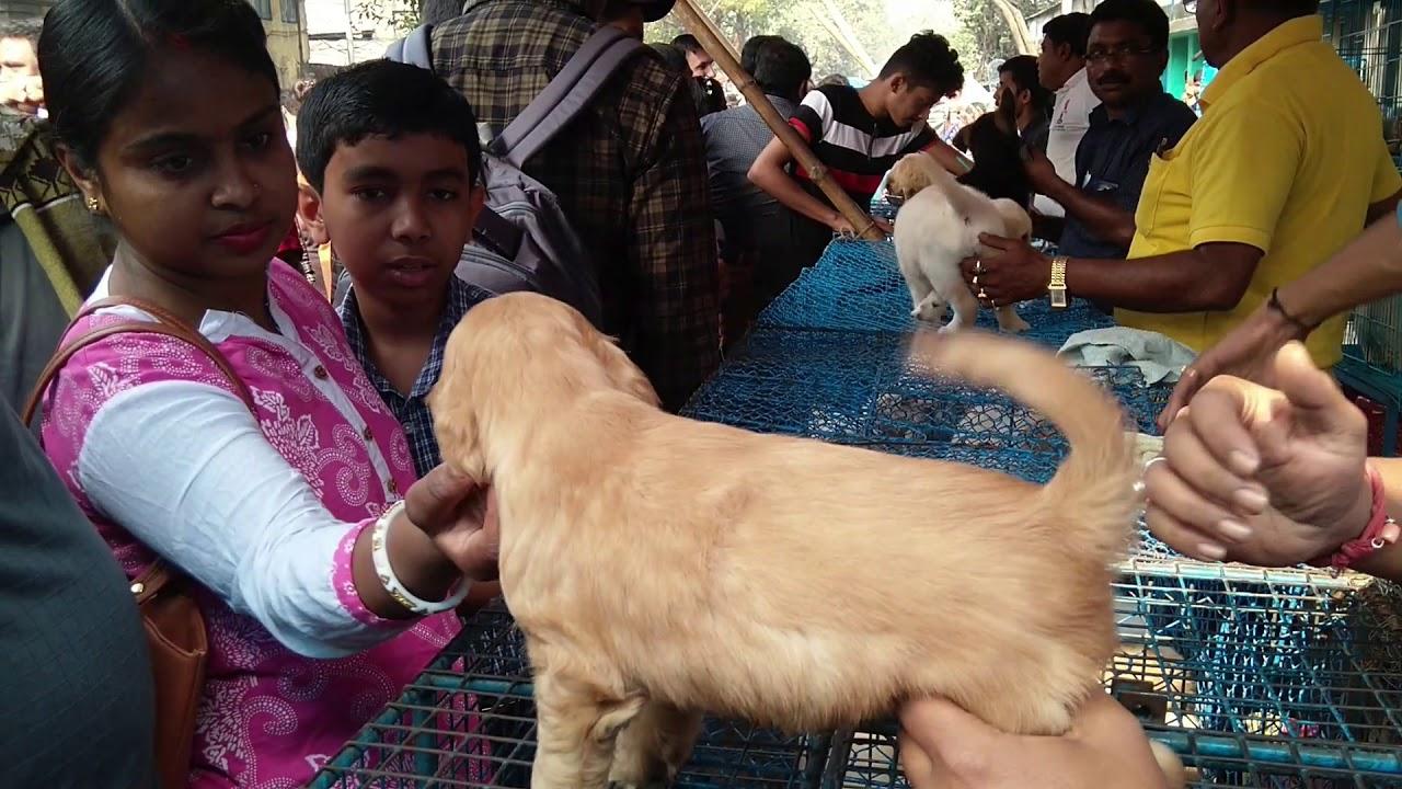 Best Quality Puppies For Sale At Galiff Street Pet Market Kolkata l Largest Pet Market Of India