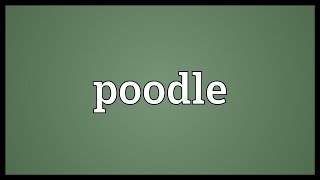 Poodle Meaning