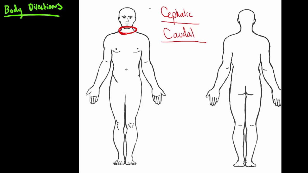 Anatomical Body Directions Youtube