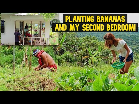 Countryside Diaries | Farming With Papa And My Second Bedroo