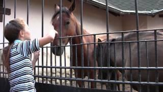 Зоопарк, лошади, дети (Москва) - Footage