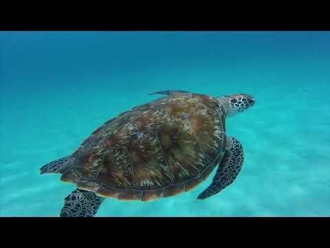 MALAYSIA - REDANG SUMMER 2017   ( Underwater )