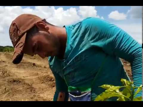 Video de Cumanayagua