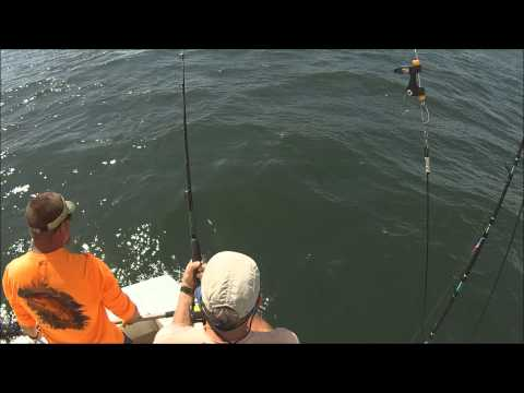Virginia Beach Fishing Charter 2013