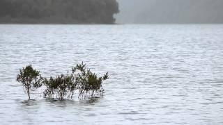 Atlas Audiovisual de la Patagonia - Árbol sumergido