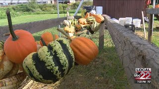 Fall crop outlook