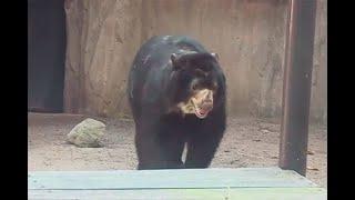 En Barranquilla se queda: satisfacción en la ciudad por decisión sobre el oso Chucho