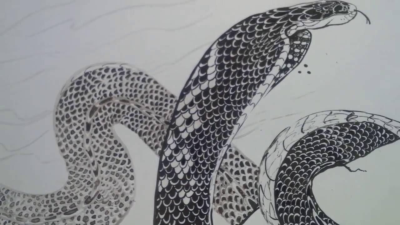 Dibujo de Serpiente Black Cobra  YouTube