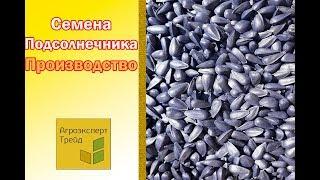 Семена подсолнечника - производство.  Чистка, калибровка, протравка, упаковка.