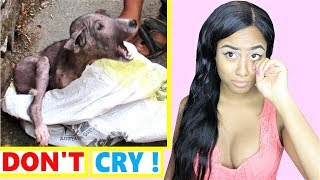Try Not To Cry Challenge : Soldiers Surprise Family and Dog rescue Compilation 2018