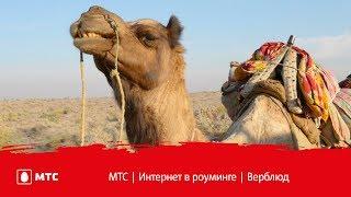 МТС | Интернет в роуминге | Верблюд