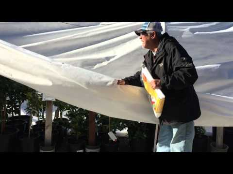 How to Guide- Using Frost Cloth to Protect Citrus