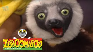 🐧 Zoboomafoo 134 - Water Creatures | National Penguin Day