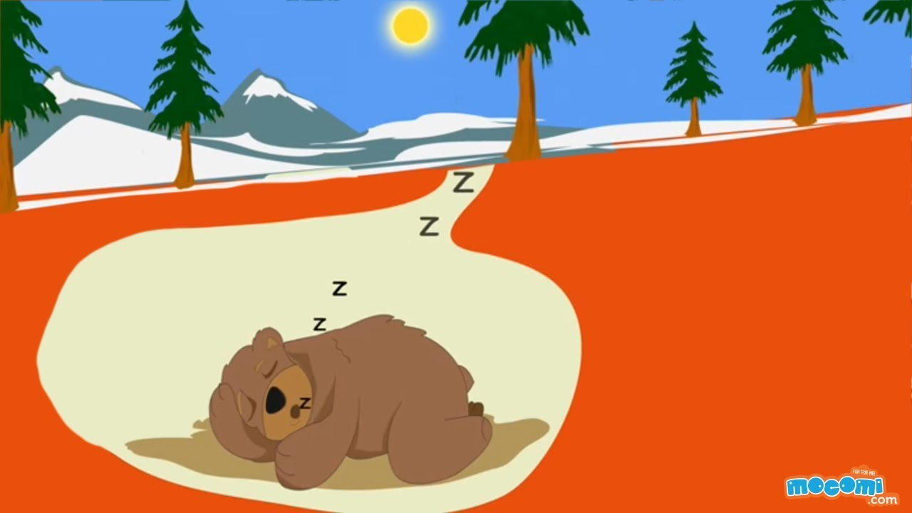 What Is Hibernation In Animals Facts And Fiction Science For Kids