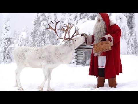 Joulupukki lastenohjelma: Joulupukin porokoira - suomenlapinkoira ja porot Lappi Pello poromaa