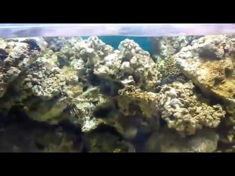 Если вы хотите содержать живые кораллы, надо позаботиться об освещении. Газон своими руками: какую газонную траву купить, как и когда сеять.