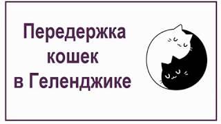 Передержка кошек в Геленджике