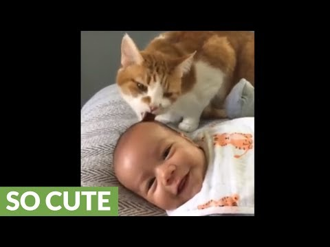 Therapy cat makes baby laugh while giving him a bath