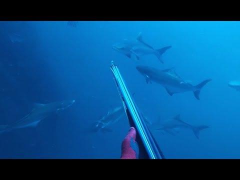 Best of Oil Rig Spearfishing - Stoph Season