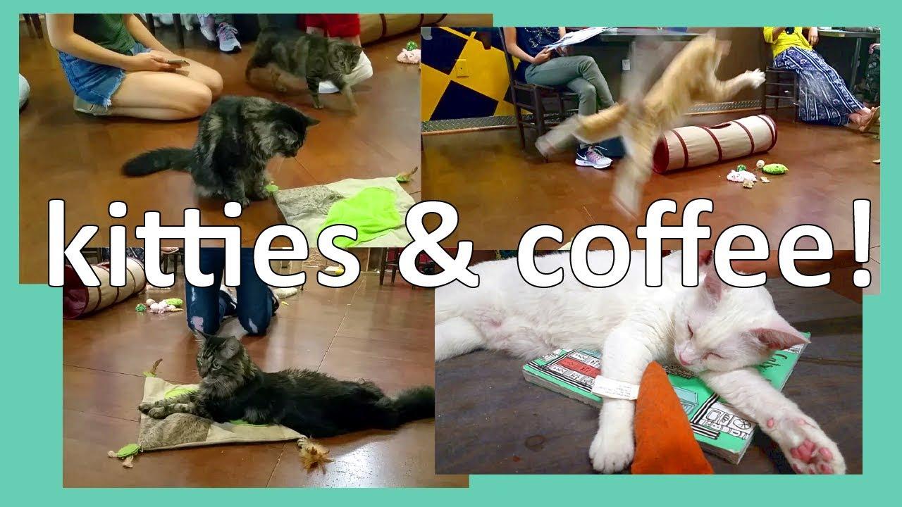 Cat Cafe In Savannah