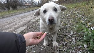 Download Rescue of a Scared Homeless Dog with a Broken Heart Mp3 and Videos