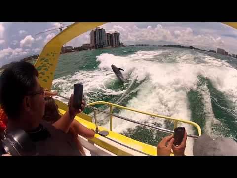 Sea Screamer Clearwater Beach Dolphin Jumping