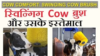 Cow Comfort: Swinging Cow brush and Its Uses in Dairy Farming - in Hindi