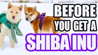 Before You Get A SHIBA INU (especially first time dog owners)