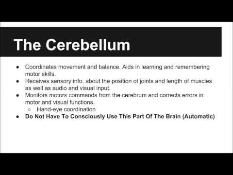 The Vertebrate Brain