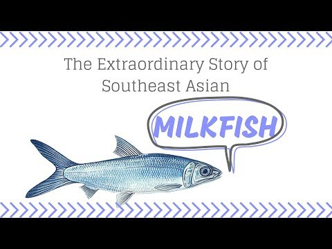 The Extraordinary Story Of Southeast Asian Milkfish (Chanos Chanos)