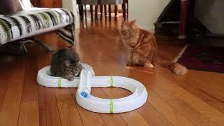 Модульная игрушка Ferplast  TYPHONE для кошек