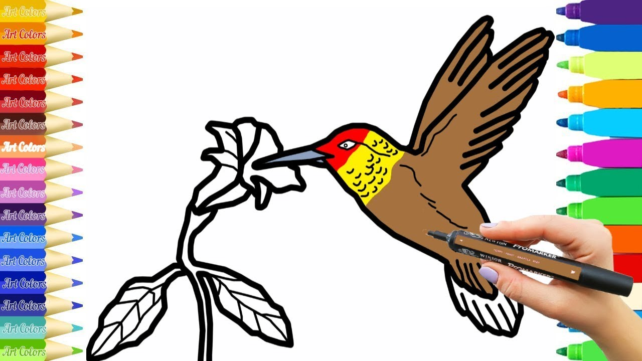 How To Draw a Hummingbird   Hummingbird Coloring Pages   Learn ...