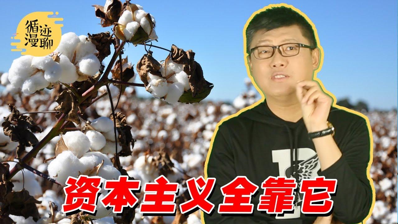 袁腾飞聊棉花:小小一支棉,千年血泪史
