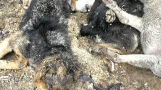 В Донецке убивают собак (Видео +18)