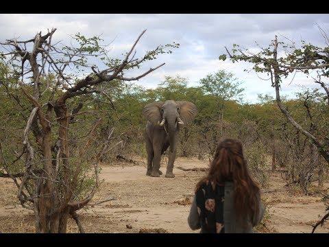 Zimbabwe Safari (Gonarezhou national park & Save valley)