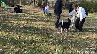 Recreation canine près d'Angers (49 Maine et Loire)