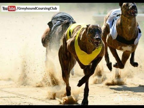 82-chak-race-10-11-12-january-2018-#9-|-dog-race-in-pakistan