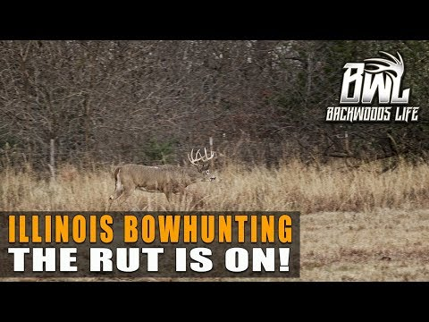 ILLINOIS BOWHUNTING BUCKS | The Whitetail Rut Is On! 13.6