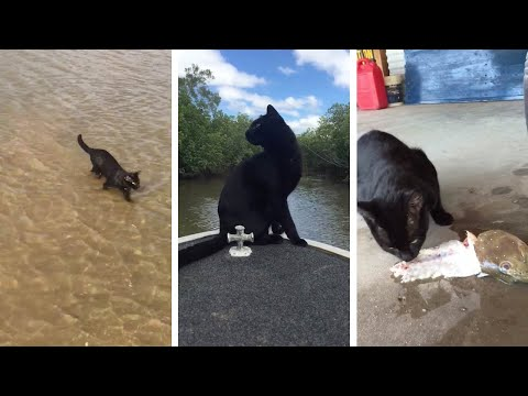 Black Cat Loves Fishing And Swimming
