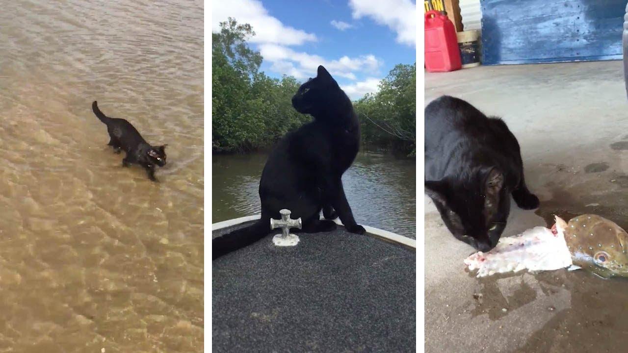 e8d4e2b39d Black Cat Loves Fishing And Swimming - YouTube